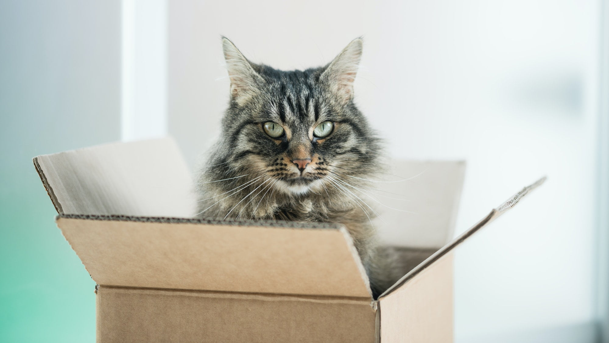 6 Tips for Moving with Cats